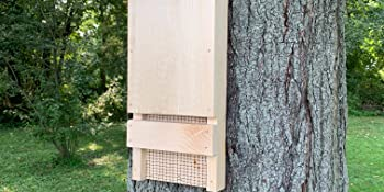 Wakefield bat house hanging on tree outside to attract bats for mosquito control