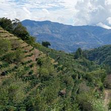 coffee bean origin Costa Rica koffee kult