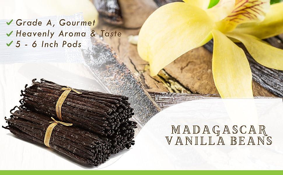 Vanilla beans Madagascar grade a natural vanilla bean gourmet whole Tahitian grade b extract paste