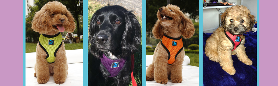 Dog harness with safety buckles is easy to use.
