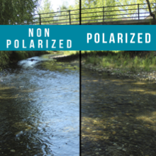 Polarization Comparison