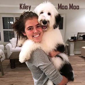 Medium to Large Dogs