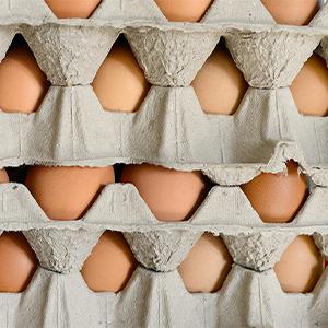 cornucopia egg cartons cardboard storage farm flats