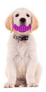 durable squeaky dog chew toy for aggressive chewers large breed