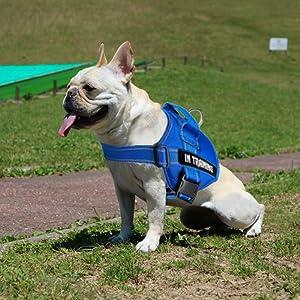 dog in training vest