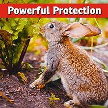 best rabbit repellent strongest most effective safe natural