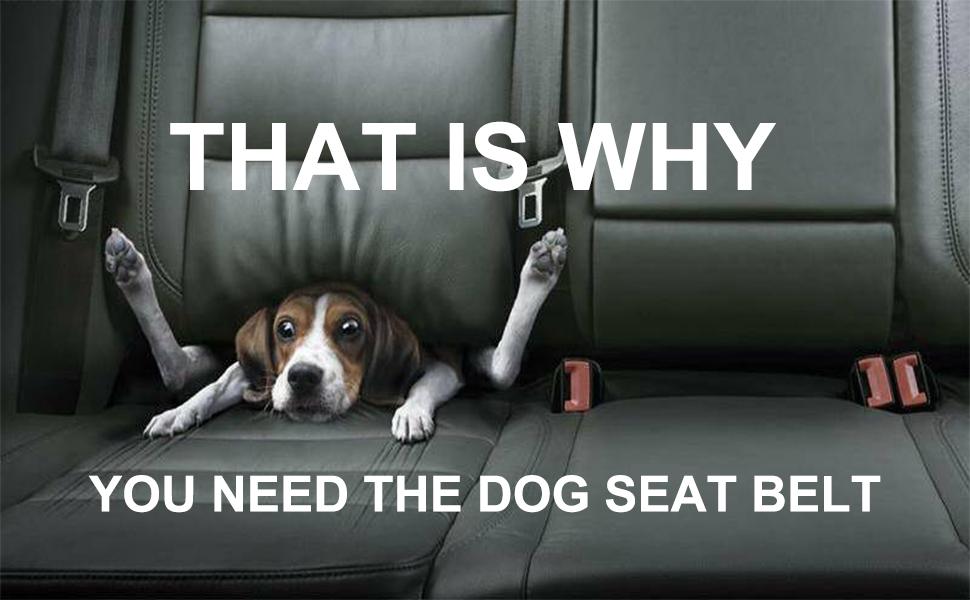 dog seat belt dog seat belt dog car harness dog seat belt harness for cars dog car seatbelt