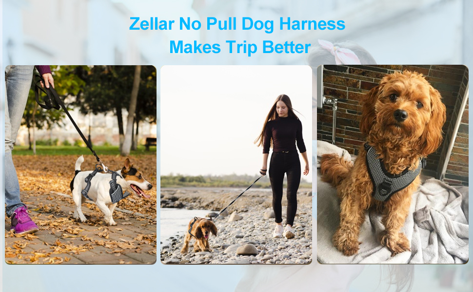 Dog Vest Harness for Training Outdoor