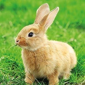 Kaninchen Außengehege Kaninchenstall