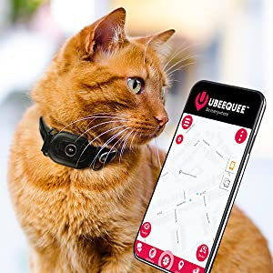 UBEE CAT attached to a collar on a ginger cat