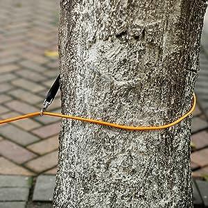 attacher votre chien à un arbre