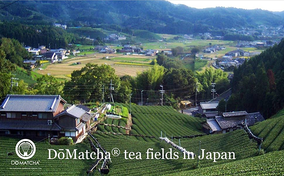 DoMatcha fields in Japan