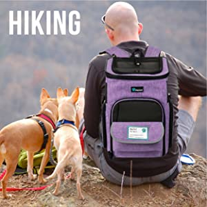 cat backpack pet small dog airline hiking puppy animal kitten outdoor hamster rabbit chinchilla