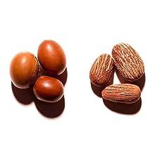 Nilotica in Shell & Nut