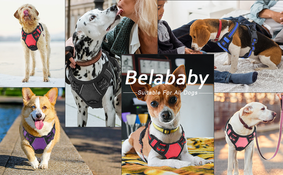 dog harness and lead set belababy harness dog no pull set sign lead k9 harnesses leash lead