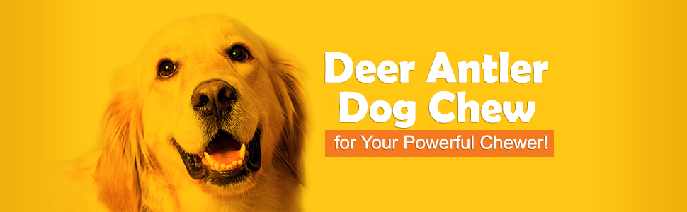 Dog chew antler is perfect for your furry friend