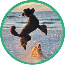 hemp Hip and joint supplement senior dog mature dog arthritis pain relief msm turmeric treat large