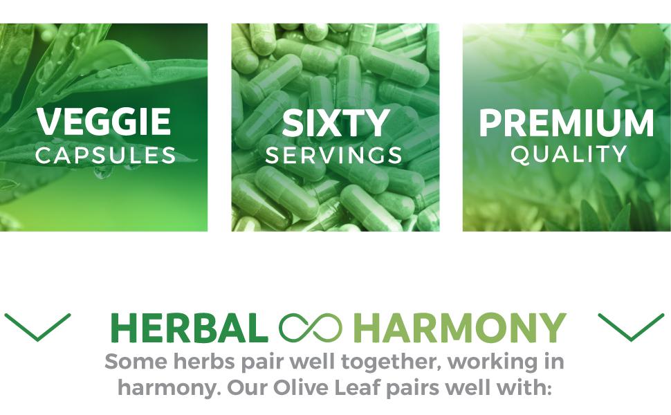 Vegetarian Olive Leaf Extract - Vegan - Premium Quality