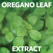Oregano leaf Extract capsules