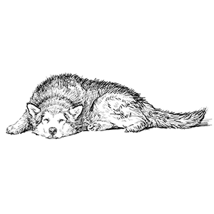 Deeper, Restful Sleep for Your Dog
