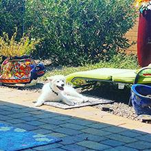 dog lead for yard