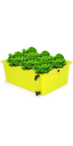 Hydroponics Growing ( Click Here )