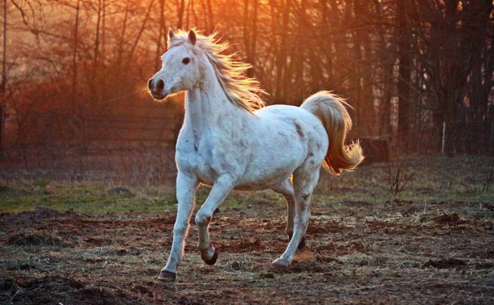 Futtermittel Pferde Nahrungsergänzungsmittel Tiere