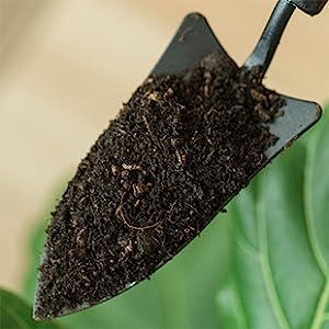 soil, Fiddle Leaf Fig Potting Soil, Potting Soil, fertilize, brown spots, prevent dropping leaves