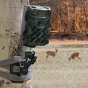 630M deer cam