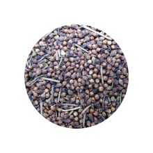 C. Nervosum Berries
