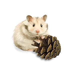 Hammock Hamster