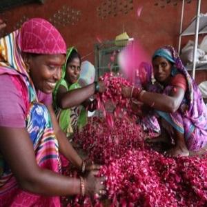 farmer organic india clean living wellness psyllium fiber probiotic prebiotic organic herb powder
