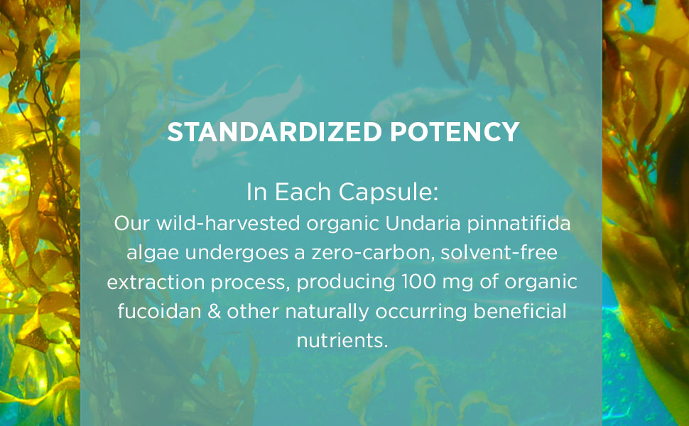 STANDARDIZED POTENCY
