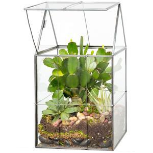 D'Eco Terrarium Glass Plants