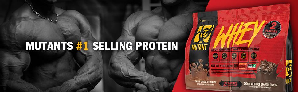 intense workout protein powder