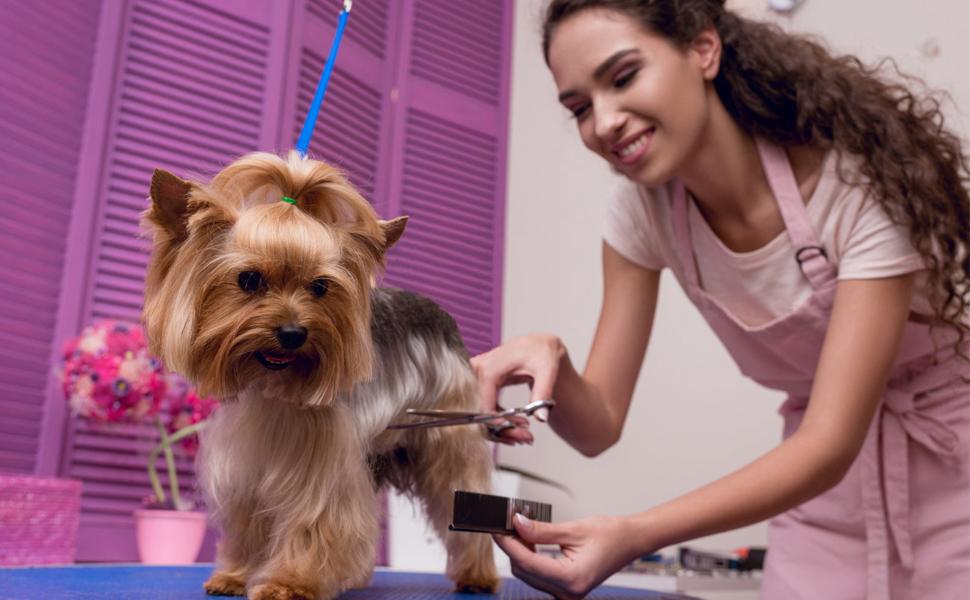 Dog Homing Grooming