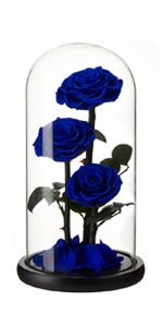 preserved rose blue