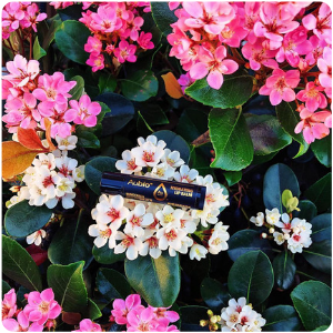 Aubio Hydrating Lip Balm sitting atop a bed of freshly bloomed flowers in the springtime