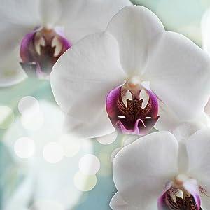 Pix_Orchids