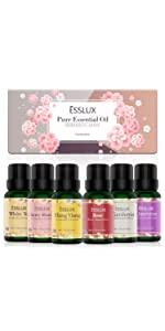 Colección floral ESSLUX