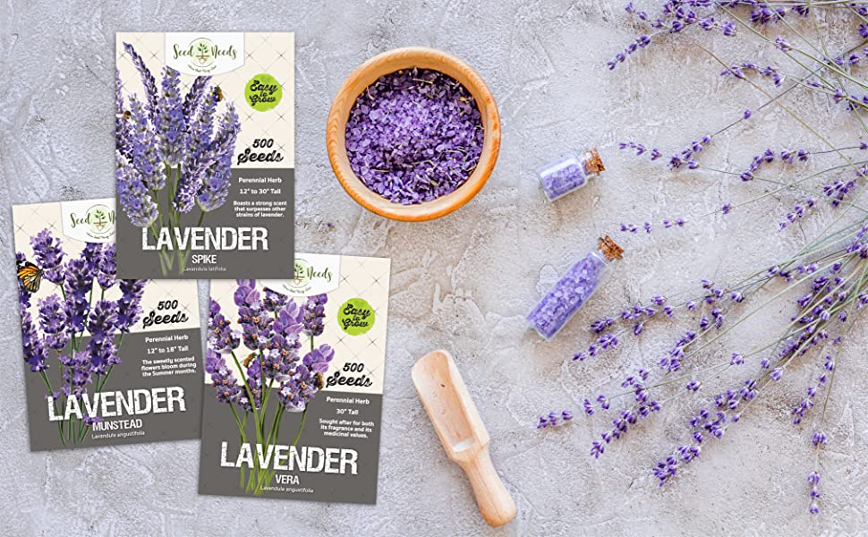 lavender seeds for sowing