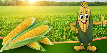 starch-based plant based starches material