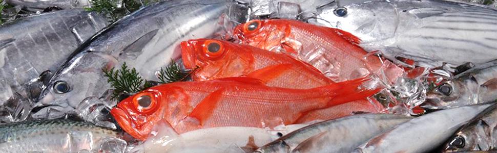 メイン:魚イメージ