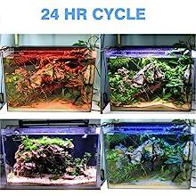 24 CYCLE