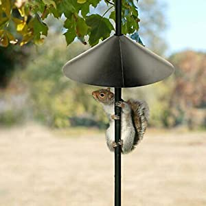 Ashman Squirrel Guard