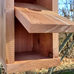 Hanging Cedar Bird Box with front face open