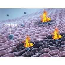 ニュートリライトが目指した究極の活性酸素対策の考え方