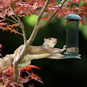 squirrel stealing peanuts from a bird feeder seed food