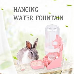 rabbit water fountain