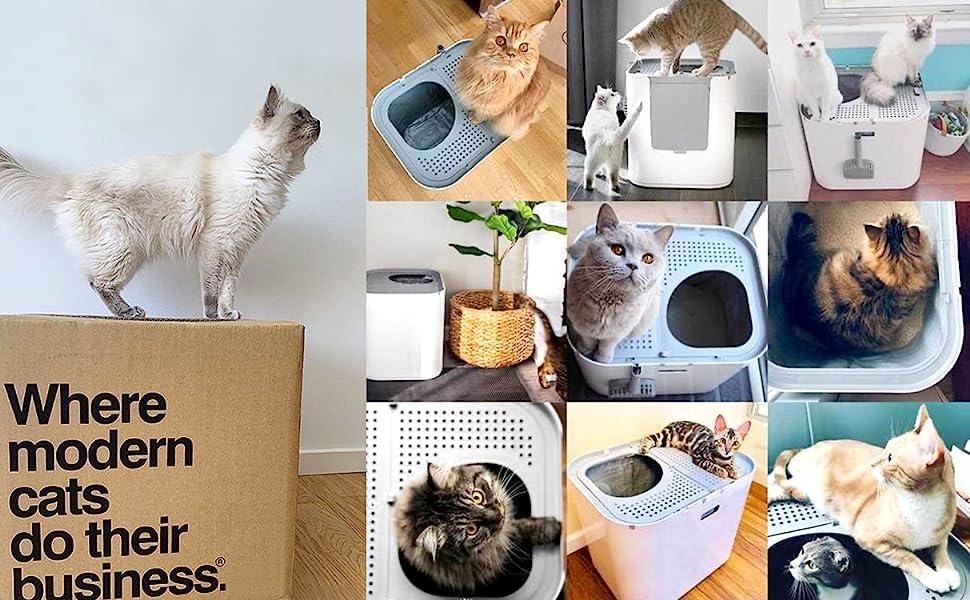 Cats Love Modkat XL